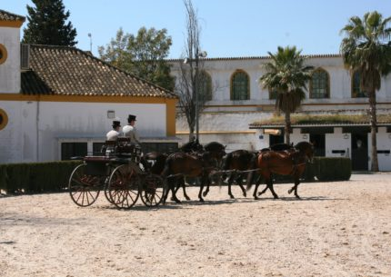 A tour to Jerez, horses and sherry